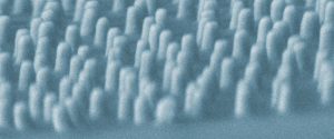 Random array of gold nanocones produced by colloidal lithography (SEM image).
